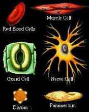 Types of cells in our body.